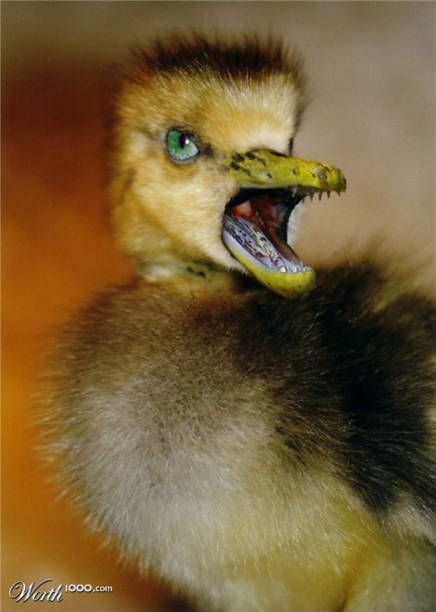 Ahh the ugly duckling........